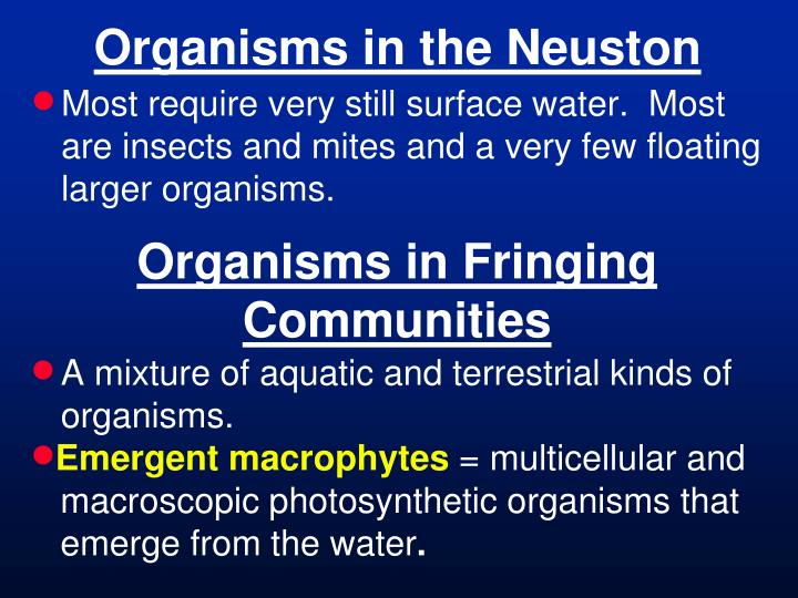 Organisms in the Neuston