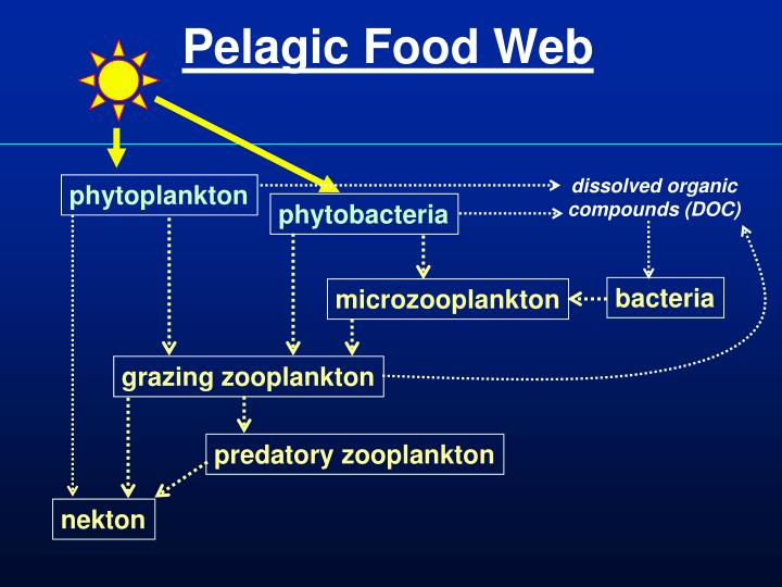 Pelagic Food Web