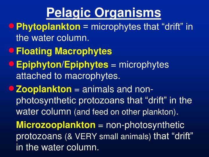 Pelagic Organisms
