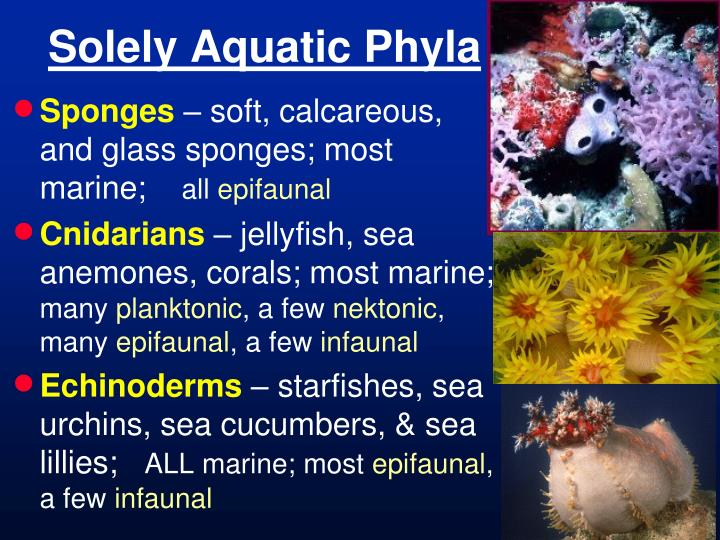 Solely Aquatic Phyla