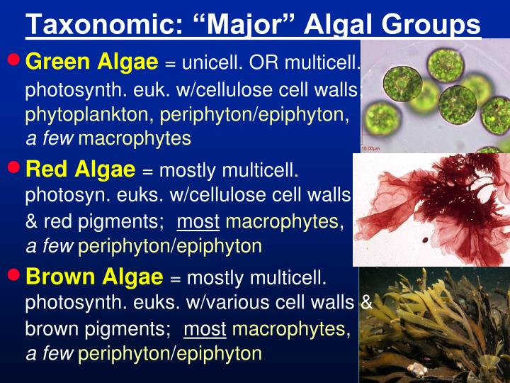 "Taxonomic: ""Major"" Algal Groups"