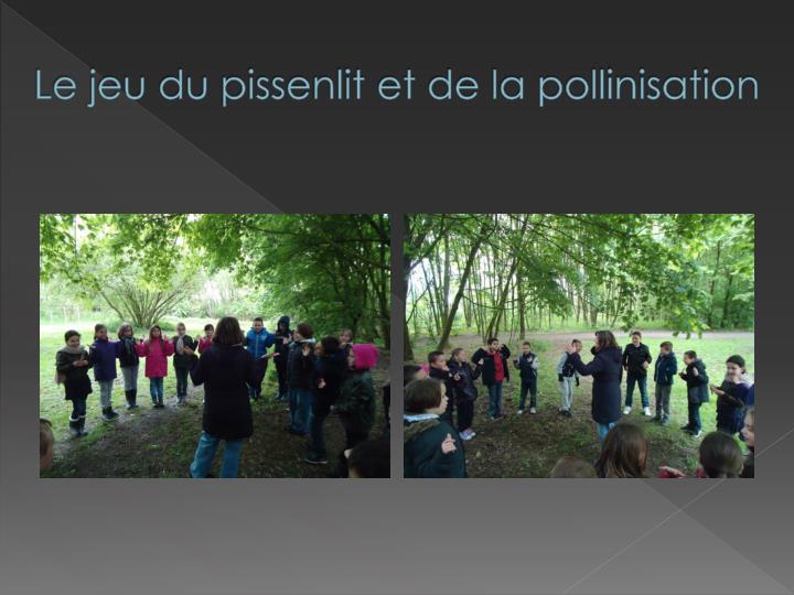 Le jeu du pissenlit et de la pollinisation
