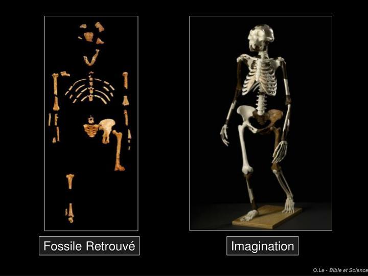 Fossile Retrouvé