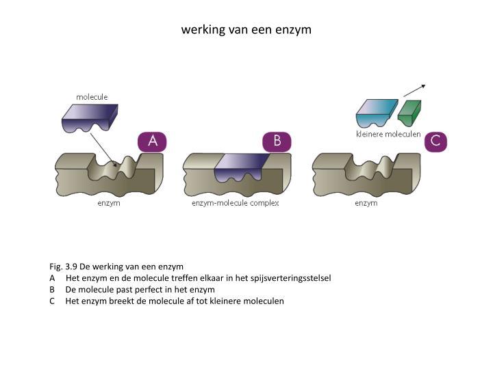 werking van een enzym