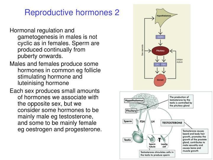 Reproductive hormones 2
