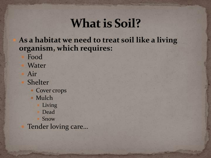 What is Soil?