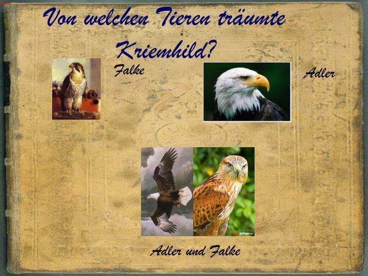 Von welchen Tieren träumte Kriemhild?