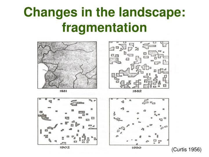 Changes in the landscape: fragmentation