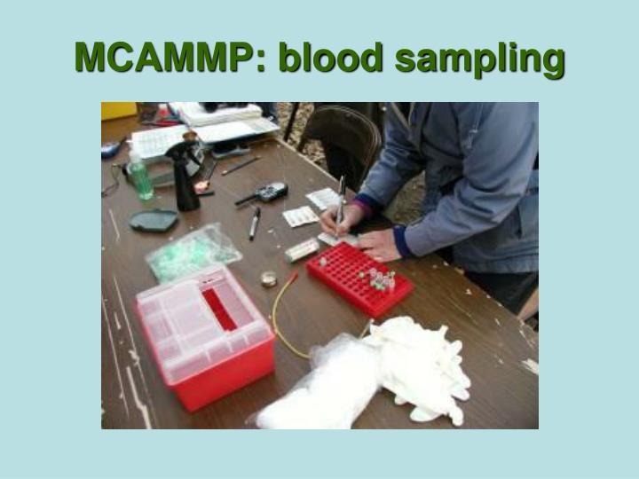 MCAMMP: blood sampling