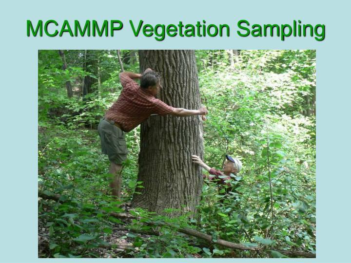 MCAMMP Vegetation Sampling