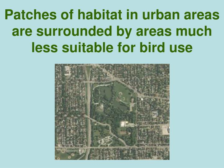 Patches of habitat in urban areas are surrounded by areas much less suitable for bird use