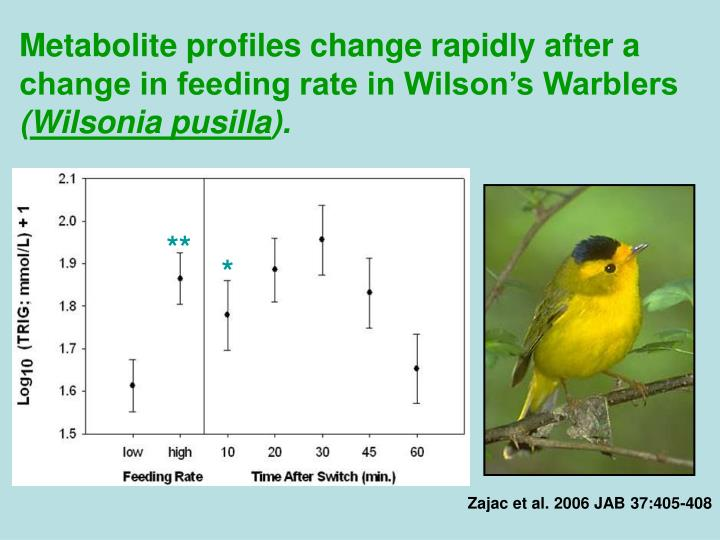 Metabolite profiles change rapidly after a change in feeding rate in Wilson's Warblers