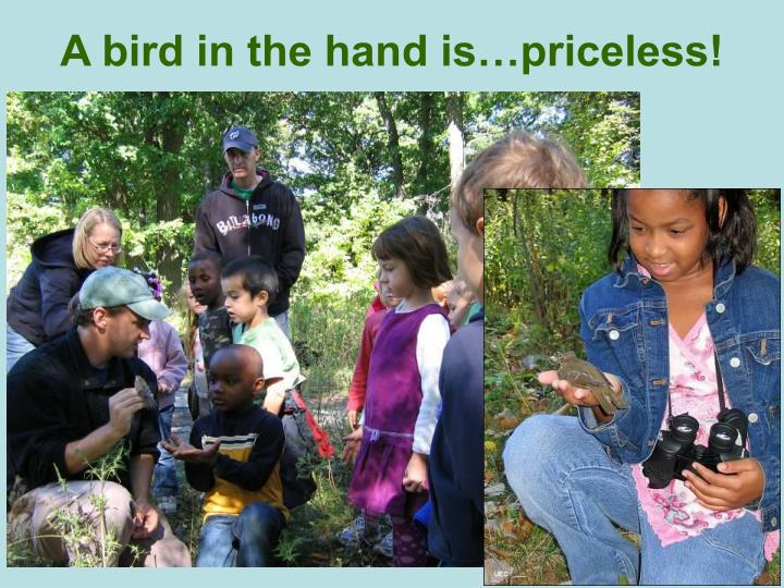 A bird in the hand is…priceless!