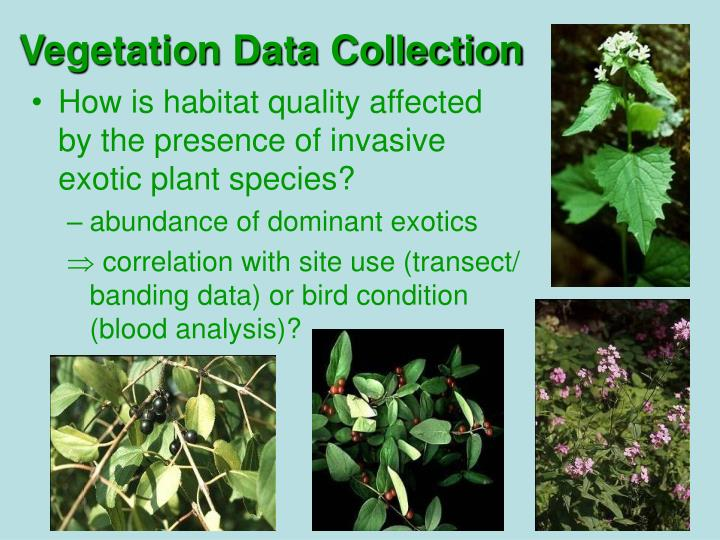 Vegetation Data Collection
