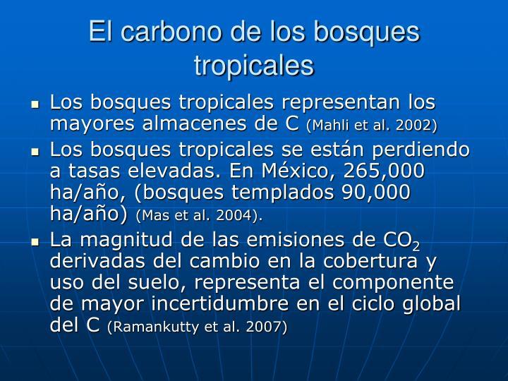 El carbono de los bosques tropicales