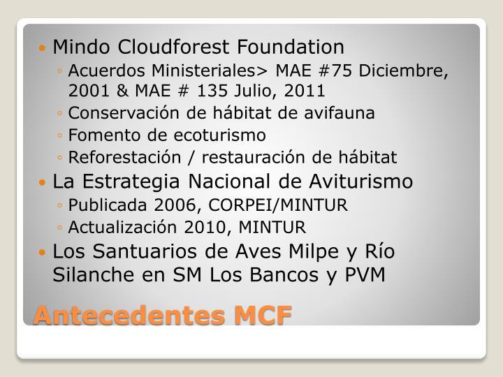 Mindo Cloudforest