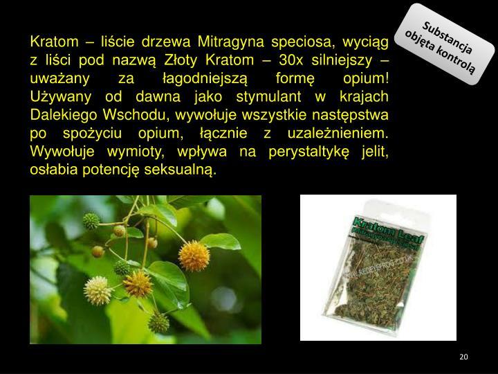 Kratom – liście drzewa Mitragyna speciosa, wyciąg  z liści pod nazwą Złoty Kratom – 30x silniejszy – uważany za łagodniejszą formę opium!                                                             Używany od dawna jako stymulant w krajach Dalekiego Wschodu, wywołuje wszystkie następstwa po spożyciu opium, łącznie z uzależnieniem. Wywołuje wymioty, wpływa na perystaltykę jelit, osłabia potencję seksualną.