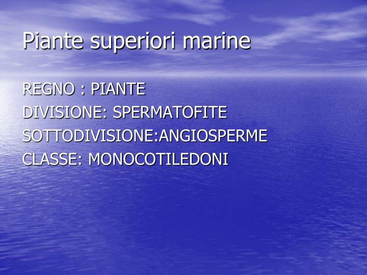 Piante superiori marine