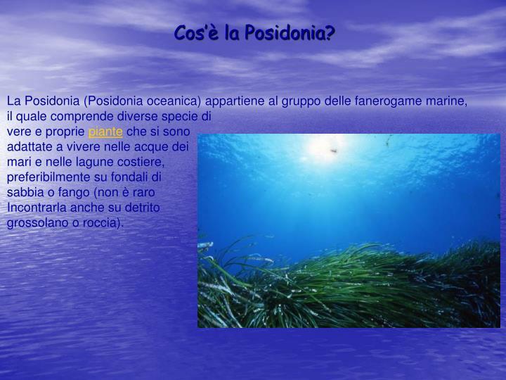 Cos'è la Posidonia?