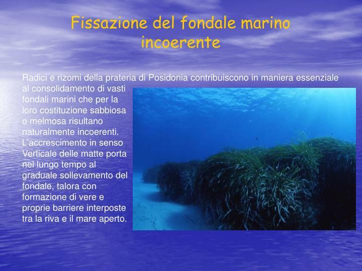 Fissazione del fondale marino