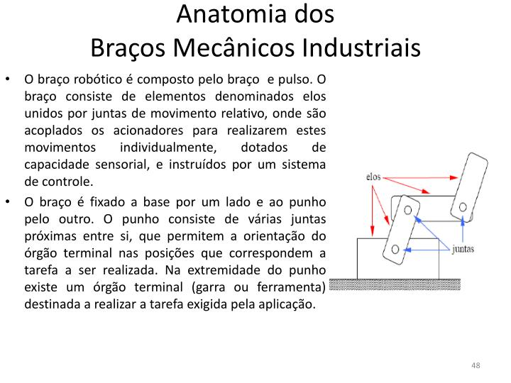 Anatomia dos