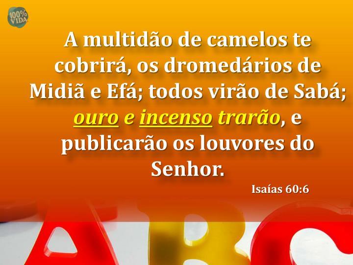 A multidão de camelos te cobrirá, os dromedários de Midiã e Efá; todos virão de Sabá;