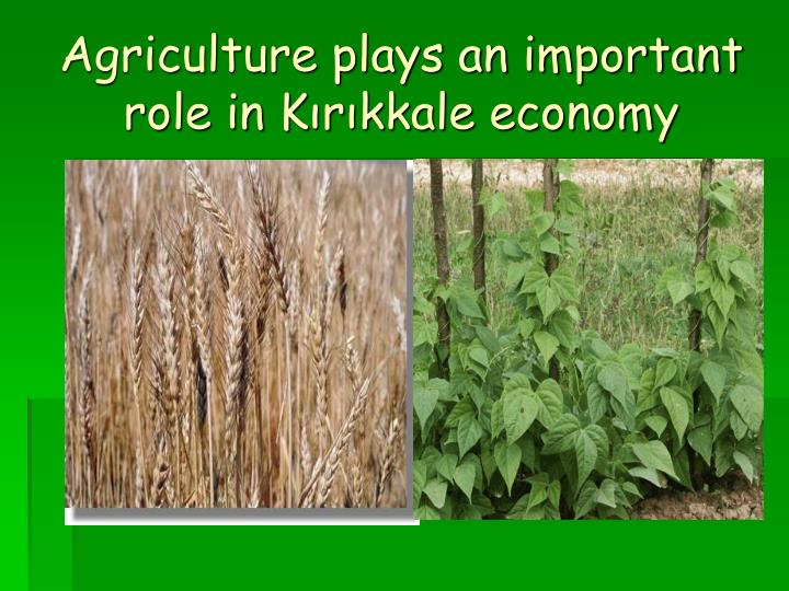 Agriculture plays an important role in Kırıkkale economy