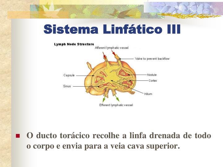 Sistema Linfático III
