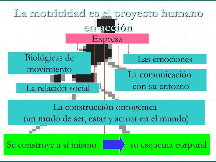 La motricidad es el proyecto humano  en acción