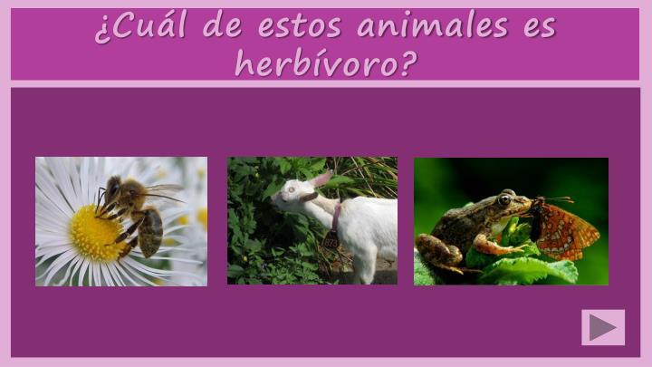 ¿Cuál de estos animales es herbívoro?