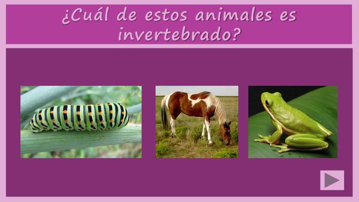 ¿Cuál de estos animales es invertebrado?