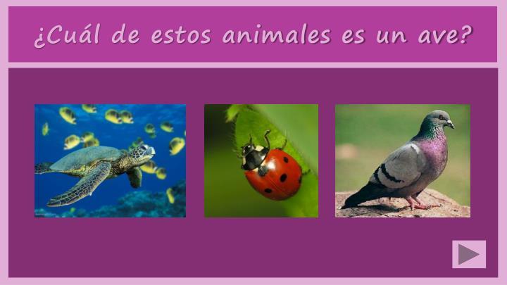 ¿Cuál de estos animales es un ave?