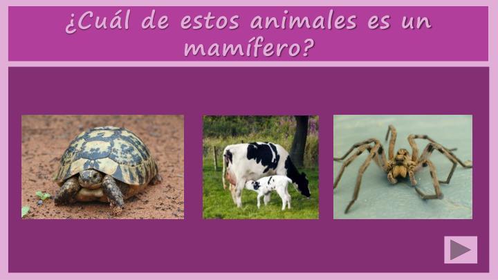 ¿Cuál de estos animales es un mamífero?