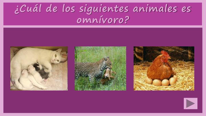 ¿Cuál de los siguientes animales es omnívoro?