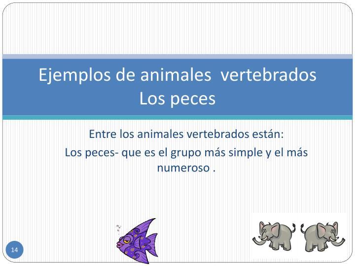 Ejemplos de animales  vertebrados
