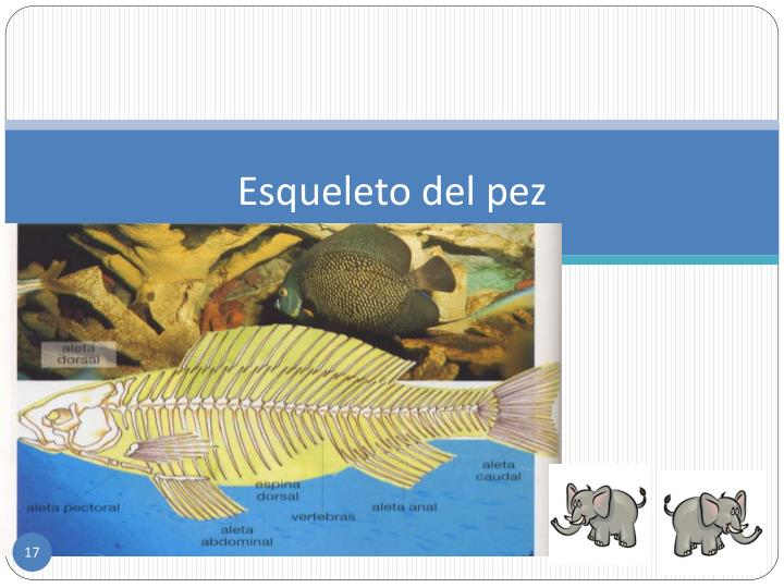 Esqueleto del pez
