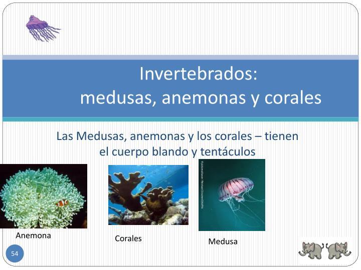 Invertebrados: