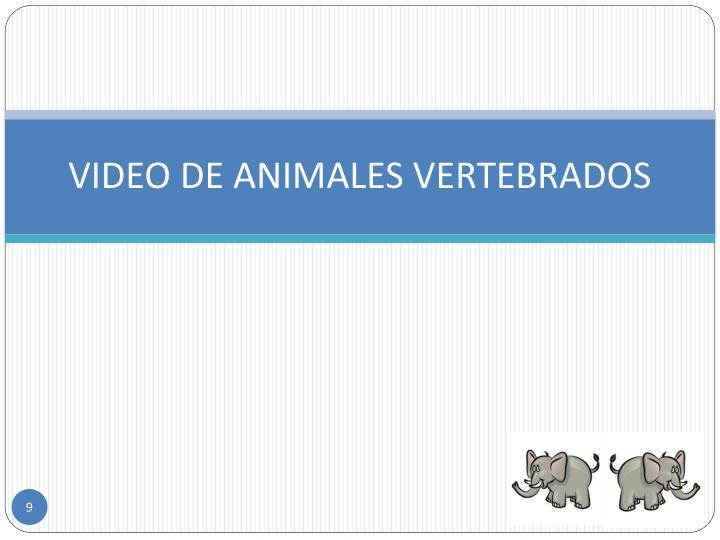 VIDEO DE ANIMALES VERTEBRADOS