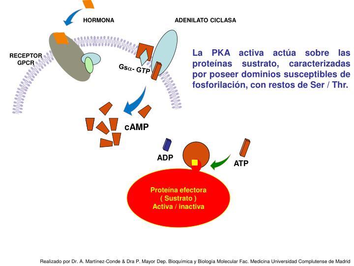 Proteína efectora