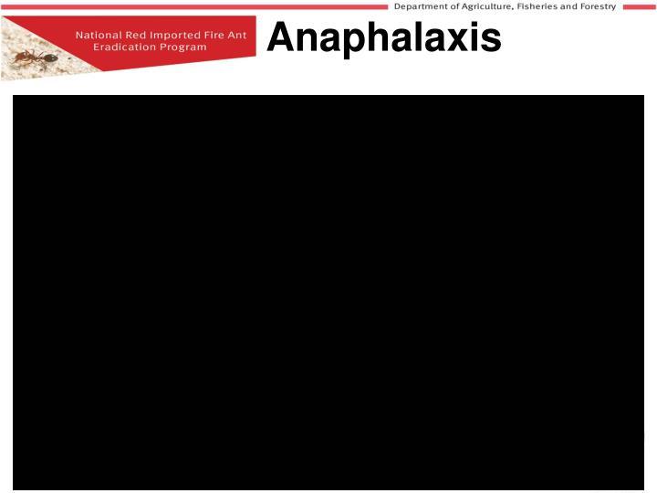 Anaphalaxis
