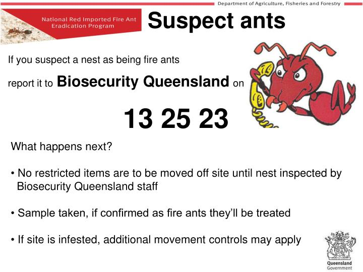 If you suspect a nest as being fire ants