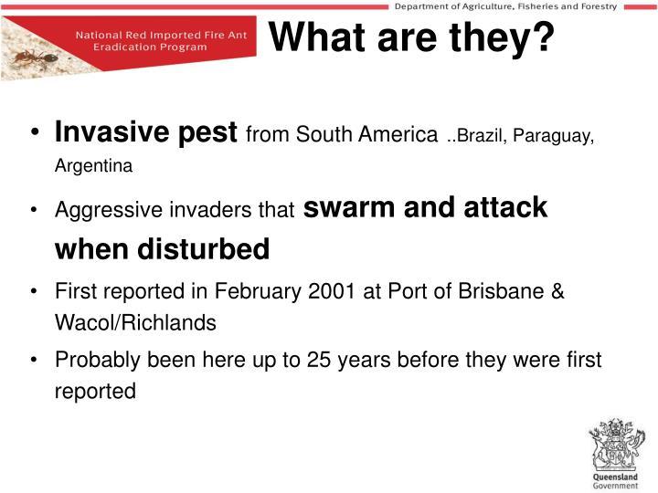 Invasive pest