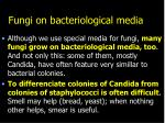 fungi on bacteriological media