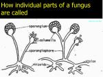 how individual parts of a fungus are called
