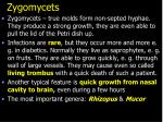 zygomycets