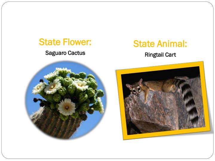 State Flower: