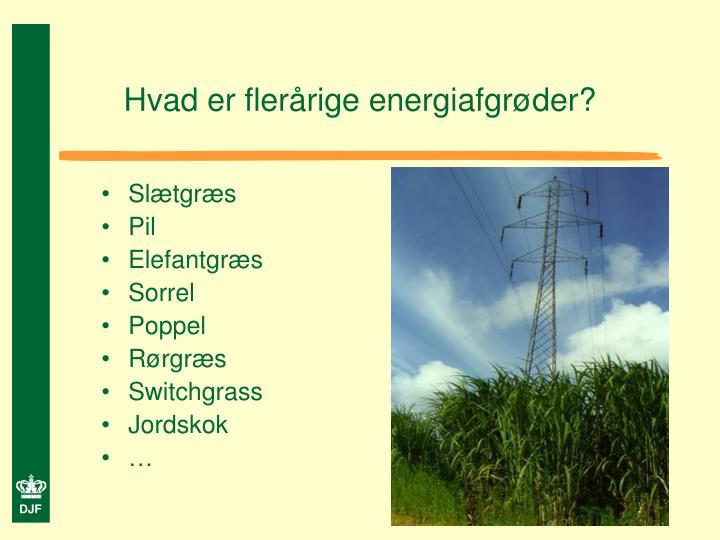 Hvad er flerårige energiafgrøder?