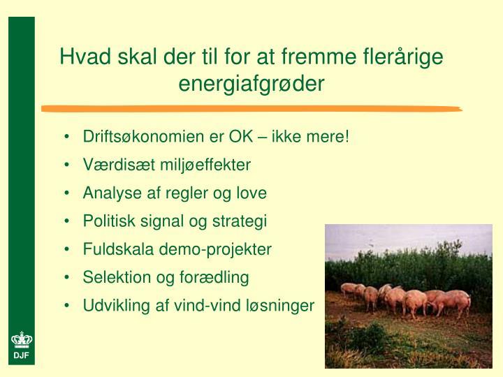 Hvad skal der til for at fremme flerårige energiafgrøder