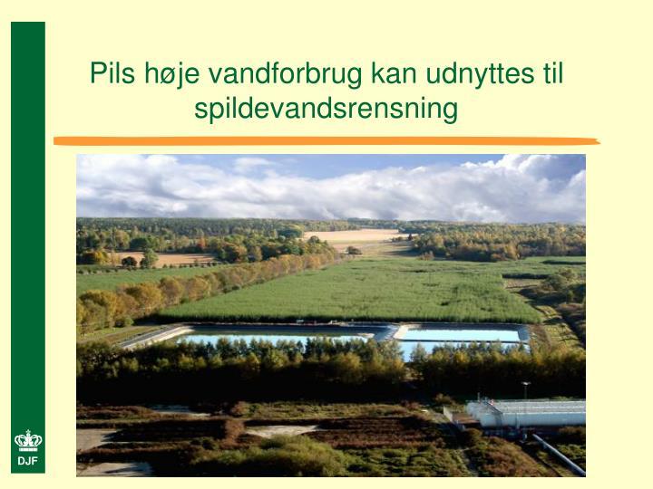 Pils høje vandforbrug kan udnyttes til spildevandsrensning