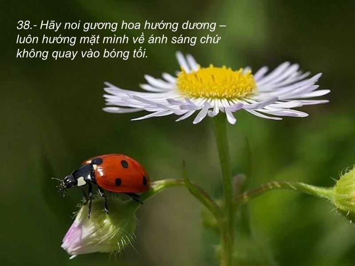 38.- Hy noi gng hoa hng dng  lun hng mt mnh v nh sng ch khng quay vo bng ti.